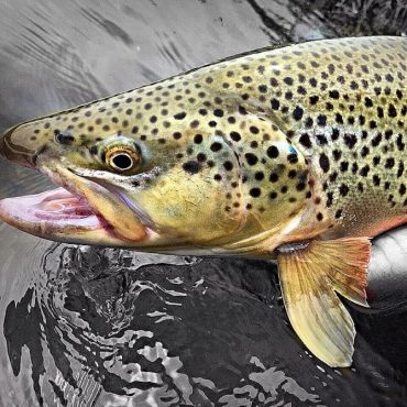Green River / New Fork River Fishing Report: 4/29/2017