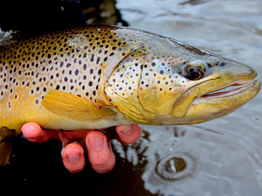 Fishing Report 05/18/15