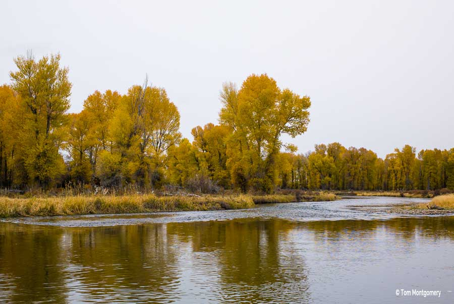 Fly fishing the New Fork River - Pinedale, Wyoming