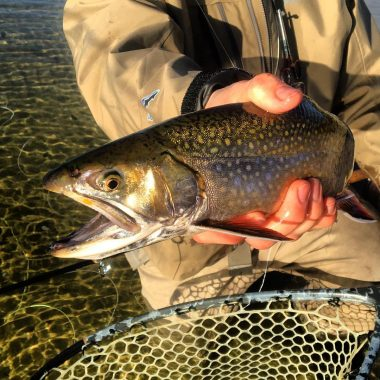 Green River / New Fork River Fishing Report: 6/3/2017