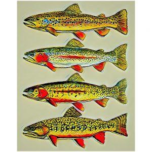 Artist Series Trout Species Sticker