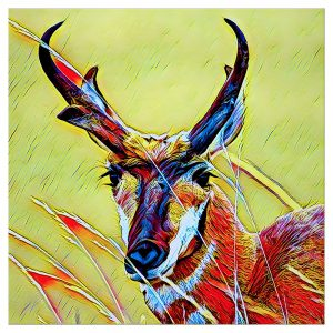Artist Series Antelope Sticker