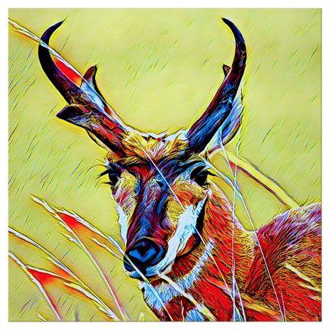 Artist Series Antelope Sticker