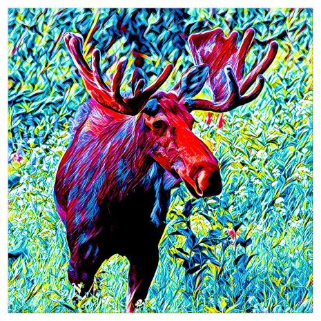 Artist Series Moose Sticker